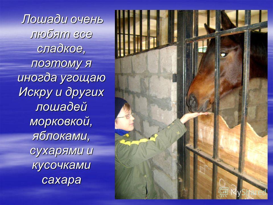Лошади очень любят все сладкое, поэтому я иногда угощаю Искру и других лошадей морковкой, яблоками, сухарями и кусочками сахара Лошади очень любят все сладкое, поэтому я иногда угощаю Искру и других лошадей морковкой, яблоками, сухарями и кусочками с