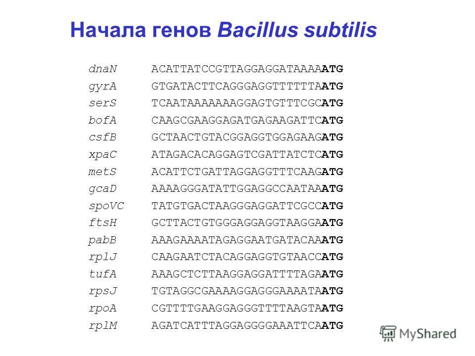 Начала генов Bacillus subtilis dnaN ACATTATCCGTTAGGAGGATAAAAATG gyrA GTGATACTTCAGGGAGGTTTTTTAATG serS TCAATAAAAAAAGGAGTGTTTCGCATG bofA CAAGCGAAGGAGATGAGAAGATTCATG csfB GCTAACTGTACGGAGGTGGAGAAGATG xpaC ATAGACACAGGAGTCGATTATCTCATG metS ACATTCTGATTAGGAG