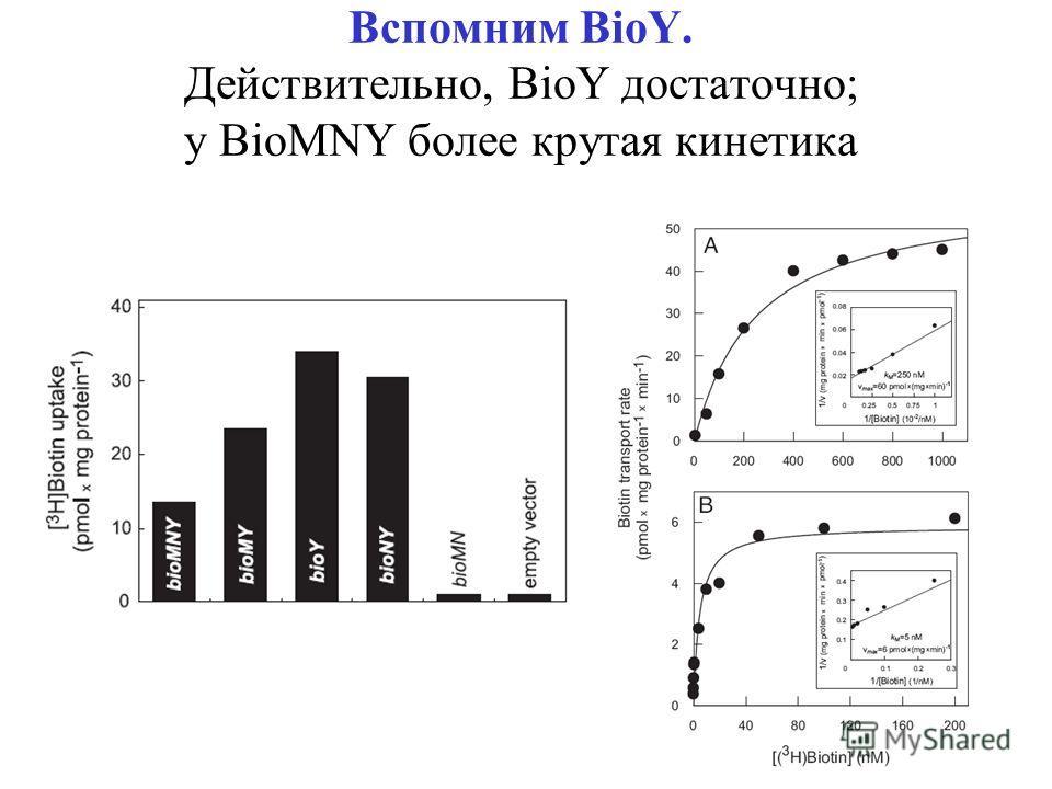 Вспомним BioY. Действительно, BioY достаточно; у BioMNY более крутая кинетика