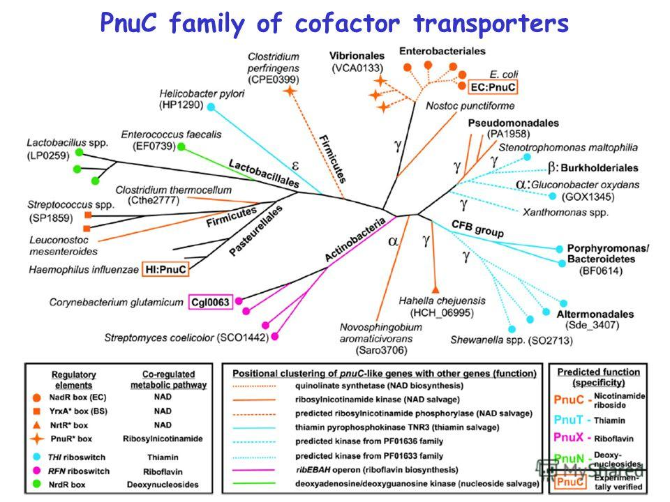 PnuC family of cofactor transporters