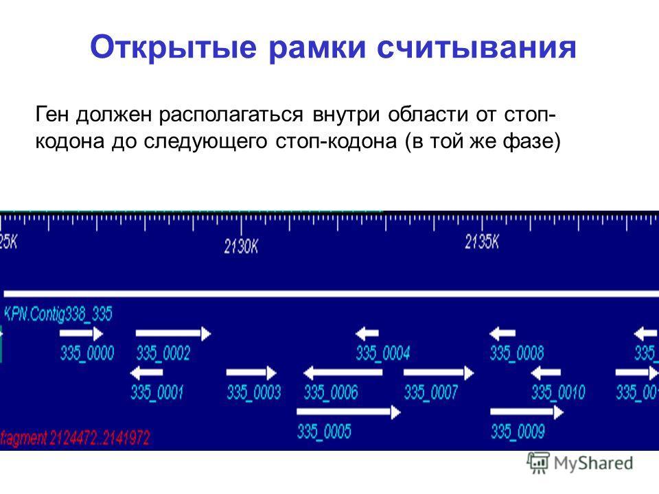 Открытые рамки считывания Ген должен располагаться внутри области от стоп- кодона до следующего стоп-кодона (в той же фазе)