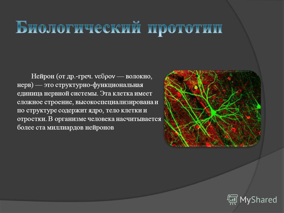 Нейрон (от др.-греч. νε ρον волокно, нерв) это структурно-функциональная единица нервной системы. Эта клетка имеет сложное строение, высокоспециализирована и по структуре содержит ядро, тело клетки и отростки. В организме человека насчитывается более