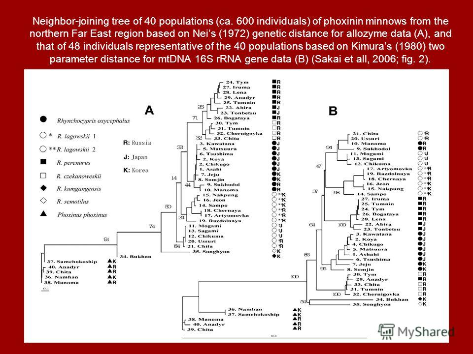 Neighbor-joining tree of 40 populations (ca. 600 individuals) of phoxinin minnows from the northern Far East region based on Neis (1972) genetic distance for allozyme data (A), and that of 48 individuals representative of the 40 populations based on