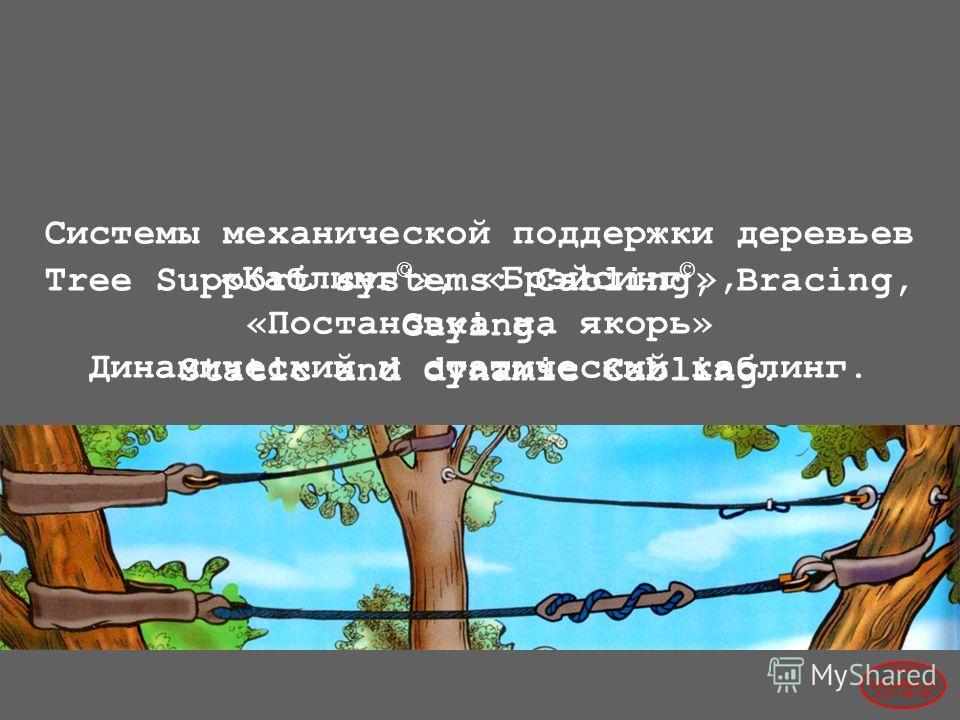 Системы механической поддержки деревьев «Каблинг © », «Брэйсинг © », «Постановка на якорь» Динамический и статический каблинг. Tree Support systems: Cabling, Bracing, Guying. Static and dynamic Cabling. 2004© www.udal.ru 410-44-45