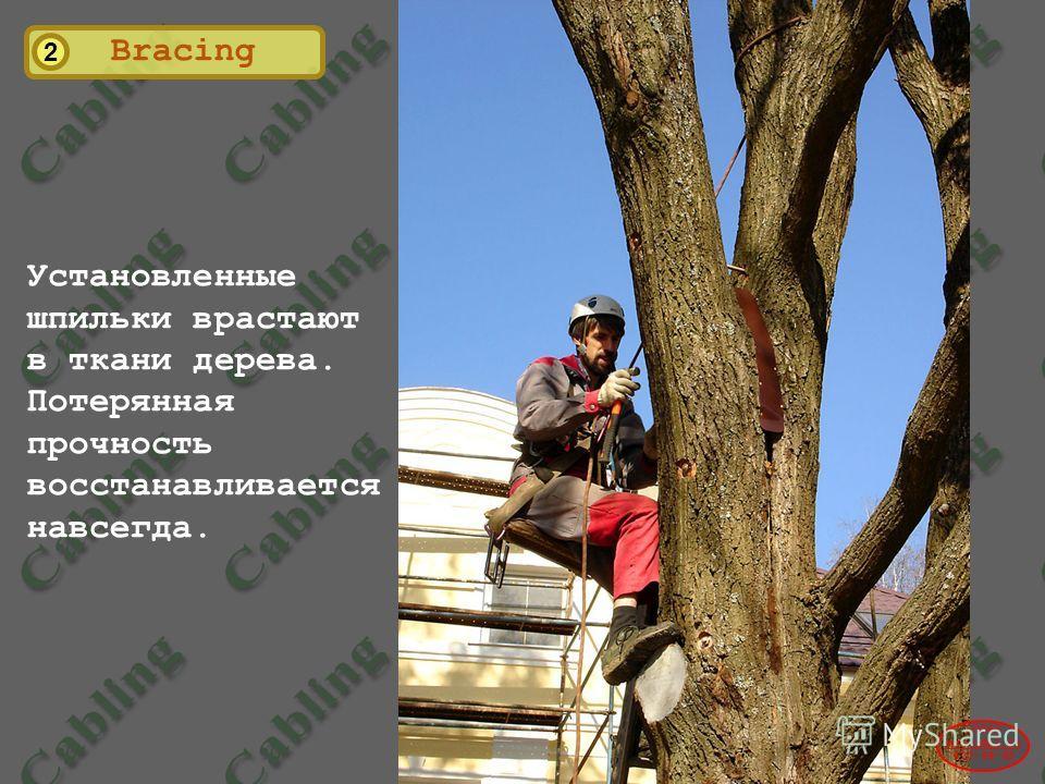 2 Установленные шпильки врастают в ткани дерева. Потерянная прочность восстанавливается навсегда. 2004© www.udal.ru 410-44-45