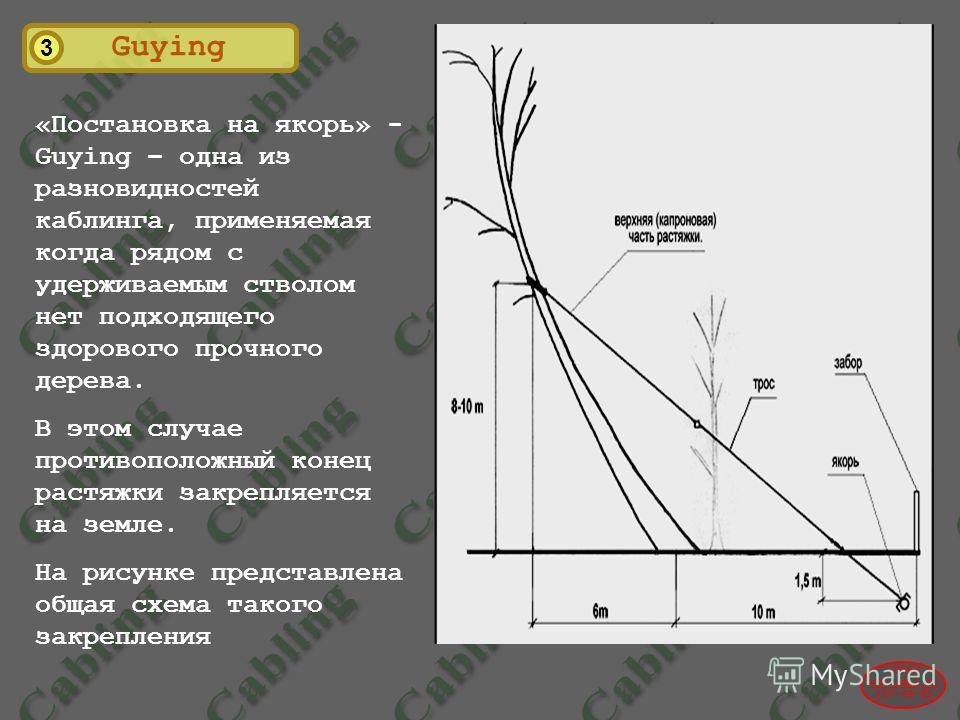 3 Guying 2004© www.udal.ru 410-44-45 «Постановка на якорь» - Guying – одна из разновидностей каблинга, применяемая когда рядом с удерживаемым стволом нет подходящего здорового прочного дерева. В этом случае противоположный конец растяжки закрепляется