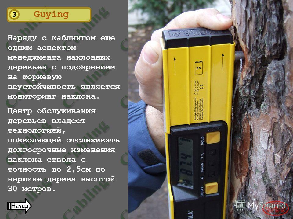 3 Guying Наряду с каблингом еще одним аспектом менеджмента наклонных деревьев с подозрением на корневую неустойчивость является мониторинг наклона. Центр обслуживания деревьев владеет технологией, позволяющей отслеживать долгосрочные изменения наклон