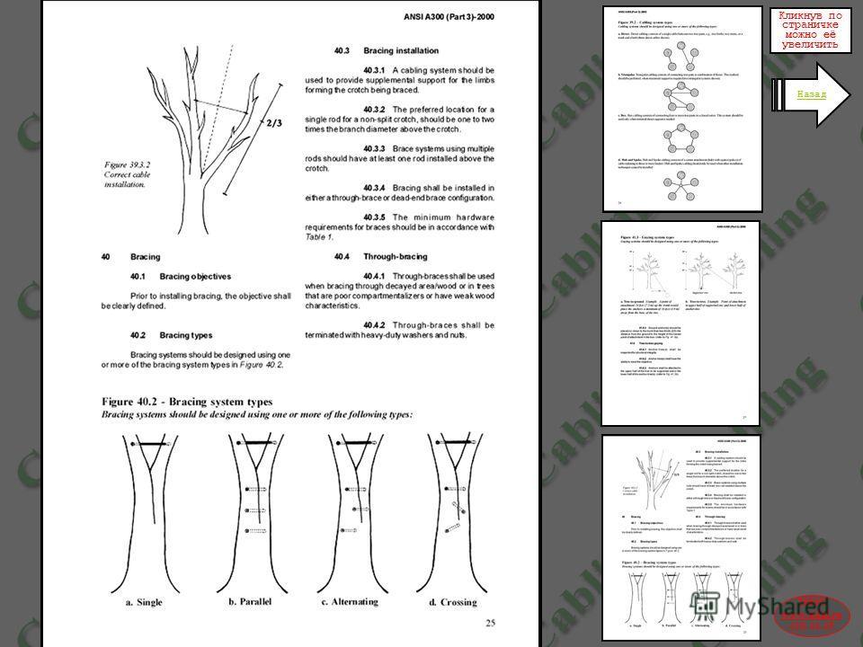 2004© www.udal.ru 410-44-45 Американский стандарт регулирующий некоторые аспекты применения и конструкций систем механической поддержки деревьев Кликнув по страничке можно её увеличить Назад