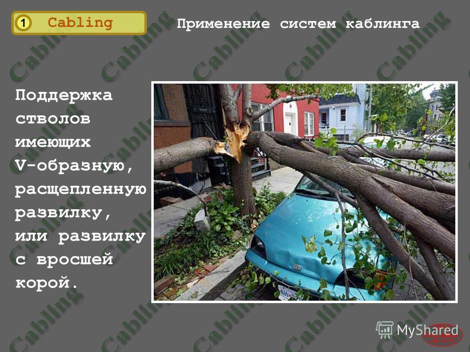 2004© www.udal.ru 410-44-45 1 Cabling Применение систем каблинга Поддержка стволов имеющих V-образную, расщепленную развилку, или развилку с вросшей корой. Поддержка горизонтальных проблемных ветвей.
