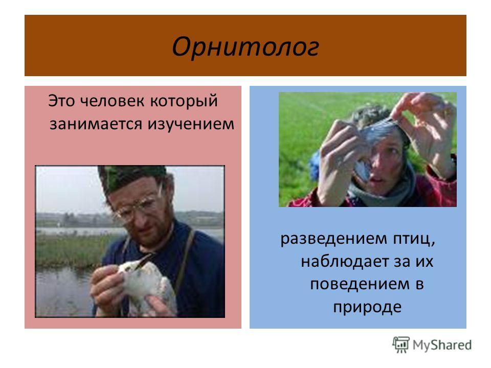 Орнитолог Это человек который занимается изучением разведением птиц, наблюдает за их поведением в природе
