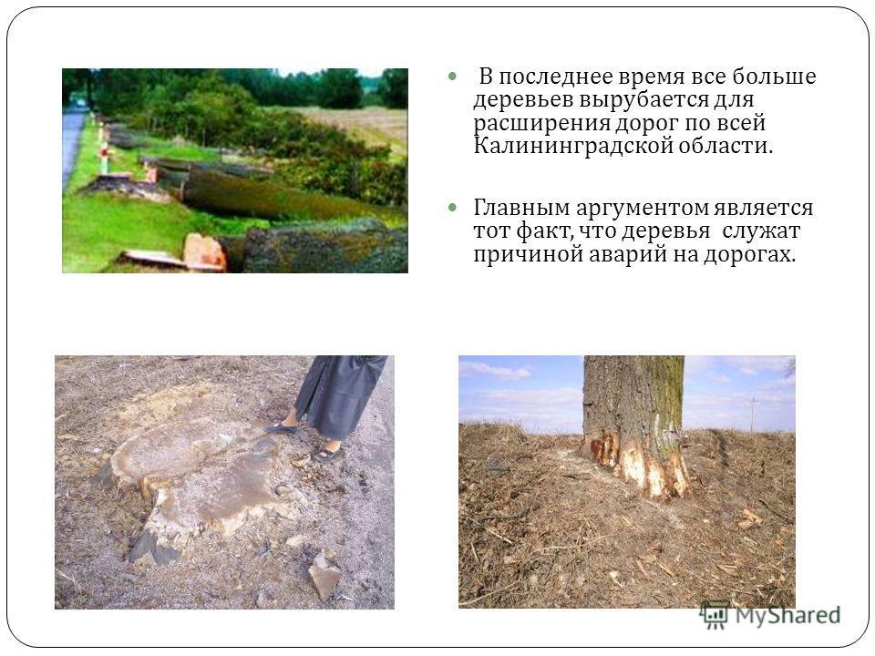 В последнее время все больше деревьев вырубается для расширения дорог по всей Калининградской области. Главным аргументом является тот факт, что деревья служат причиной аварий на дорогах.