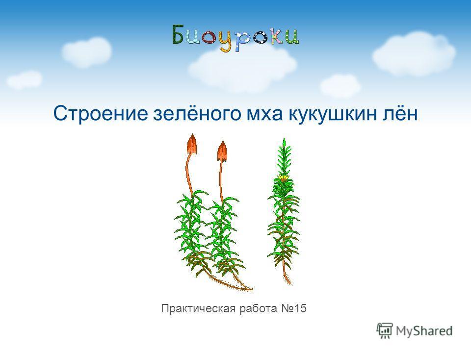 Строение зелёного мха кукушкин лён Практическая работа 15