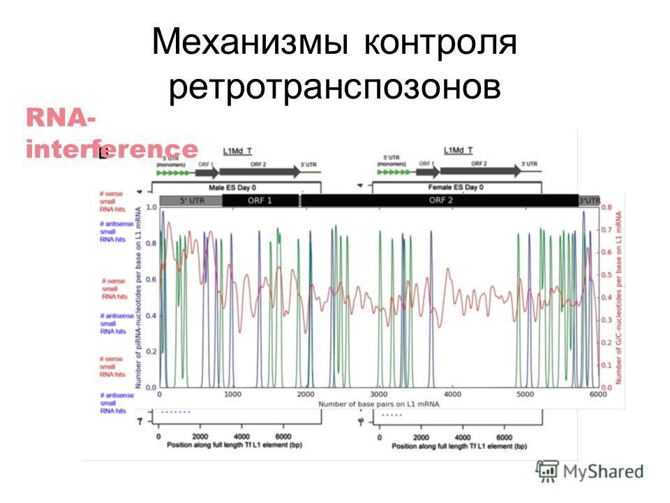 Механизмы контроля ретротранспозонов RNA- interference