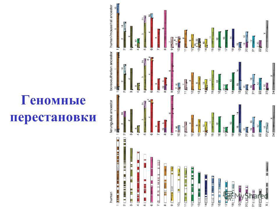 Геномные перестановки