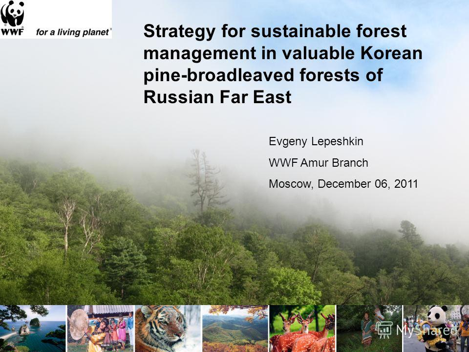 Strategy for sustainable forest management in valuable Korean pine-broadleaved forests of Russian Far East Evgeny Lepeshkin WWF Amur Branch Moscow, December 06, 2011