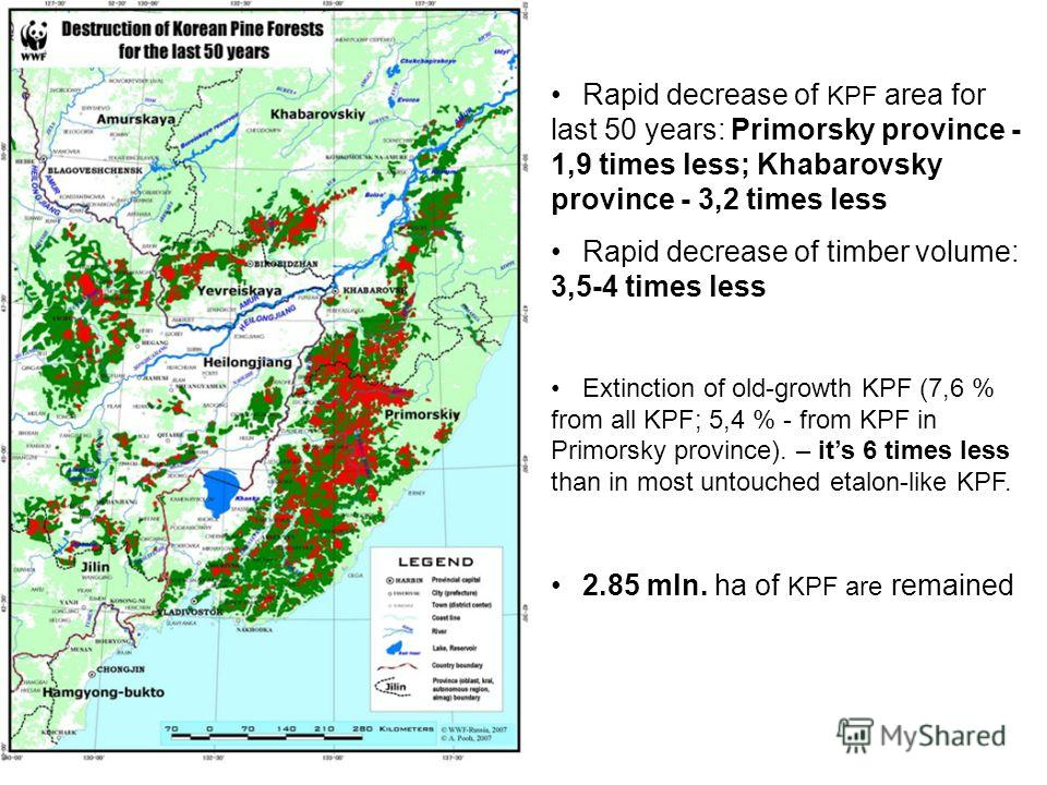 Rapid decrease of KPF area for last 50 years: Primorsky province - 1,9 times less; Khabarovsky province - 3,2 times less Rapid decrease of timber volume: 3,5-4 times less Extinction of old-growth KPF (7,6 % from all KPF; 5,4 % - from KPF in Primorsky