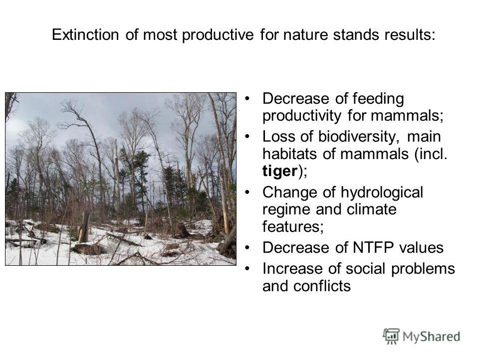 Extinction of most productive for nature stands results: Decrease of feeding productivity for mammals; Loss of biodiversity, main habitats of mammals (incl. tiger); Change of hydrological regime and climate features; Decrease of NTFP values Increase