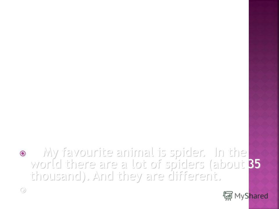 My favourite animal is spider. In the world there are a lot of spiders (about 35 thousand). And they are different. My favourite animal is spider. In the world there are a lot of spiders (about 35 thousand). And they are different.