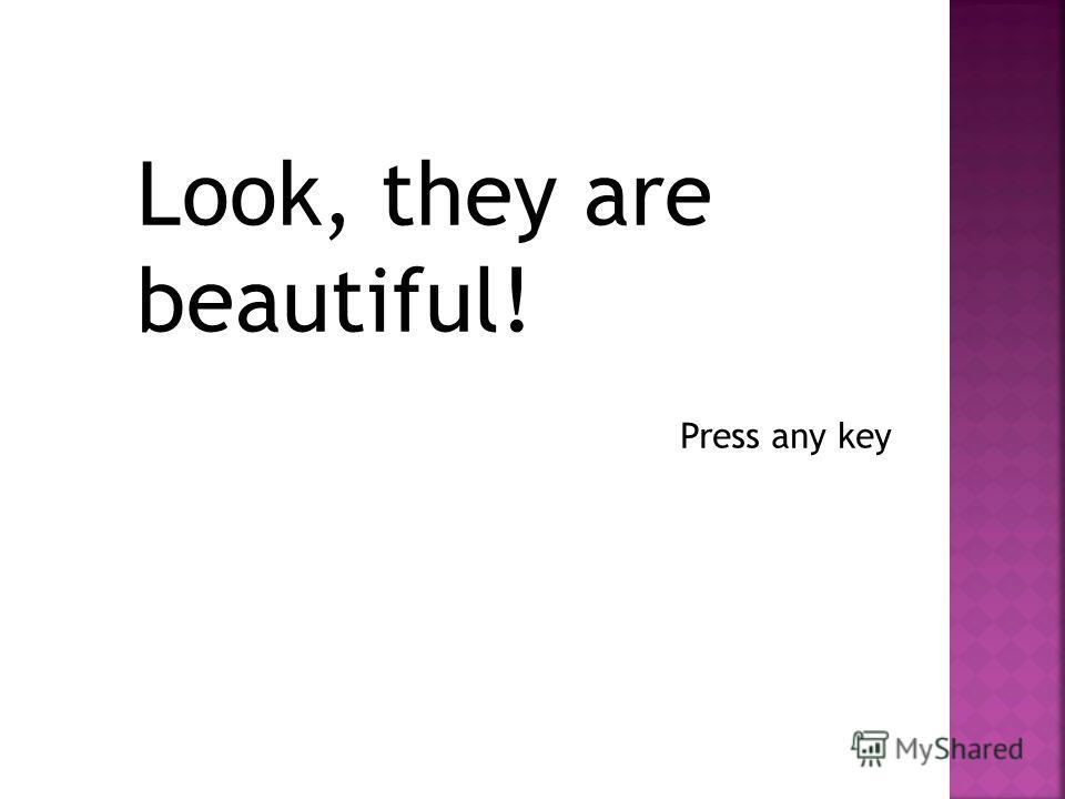 Look, they are beautiful! Press any key
