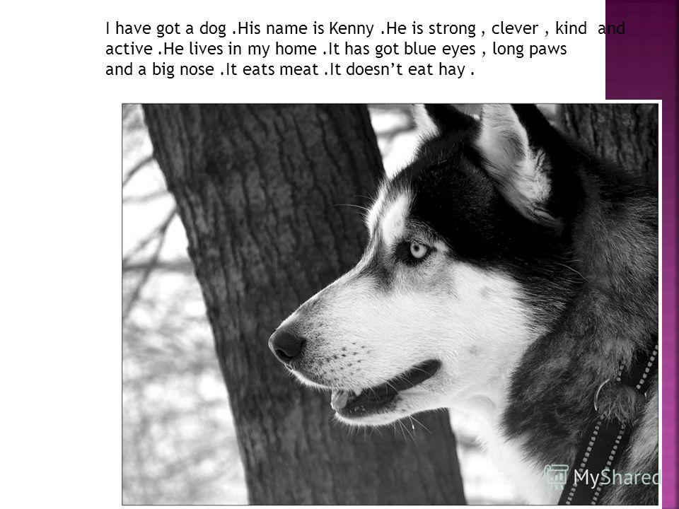 I have got a dog.His name is Kenny.He is strong, clever, kind and active.He lives in my home.It has got blue eyes, long paws and a big nose.It eats meat.It doesnt eat hay.