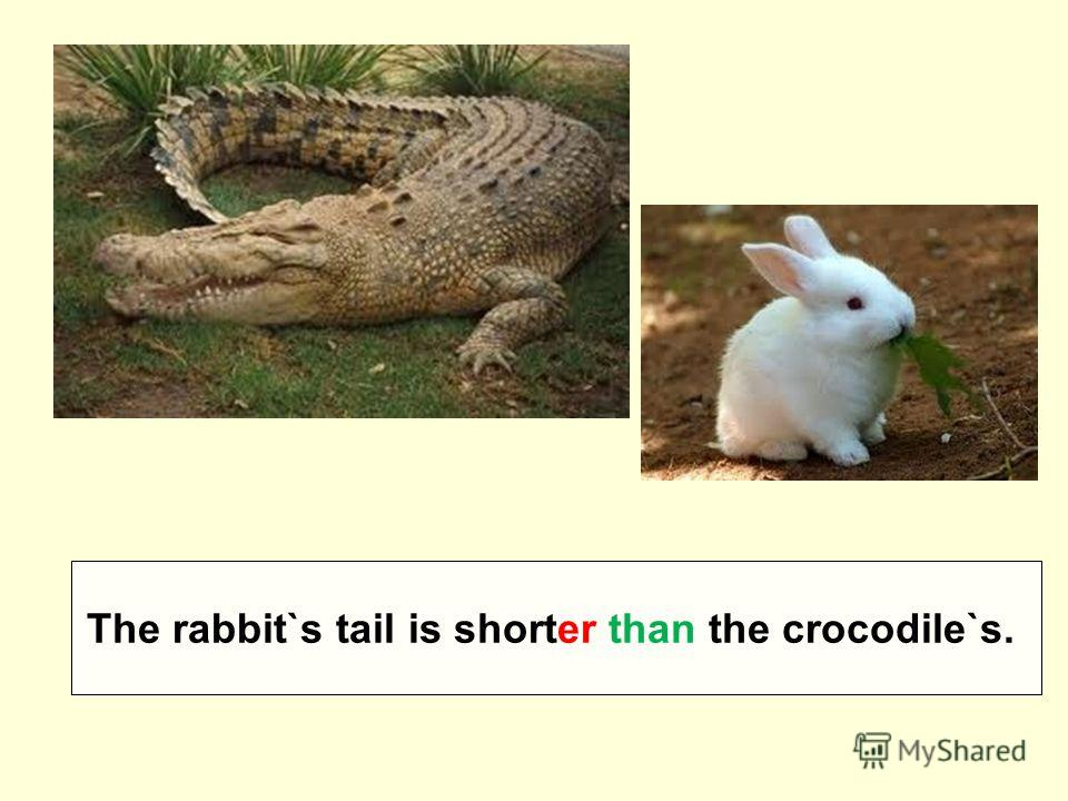 The rabbit`s tail is shorter than the crocodile`s.