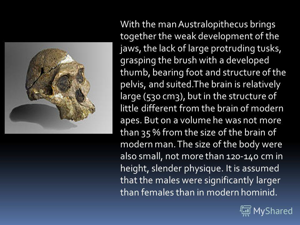 With the man Australopithecus brings together the weak development of the jaws, the lack of large protruding tusks, grasping the brush with a developed thumb, bearing foot and structure of the pelvis, and suited.The brain is relatively large (530 cm3