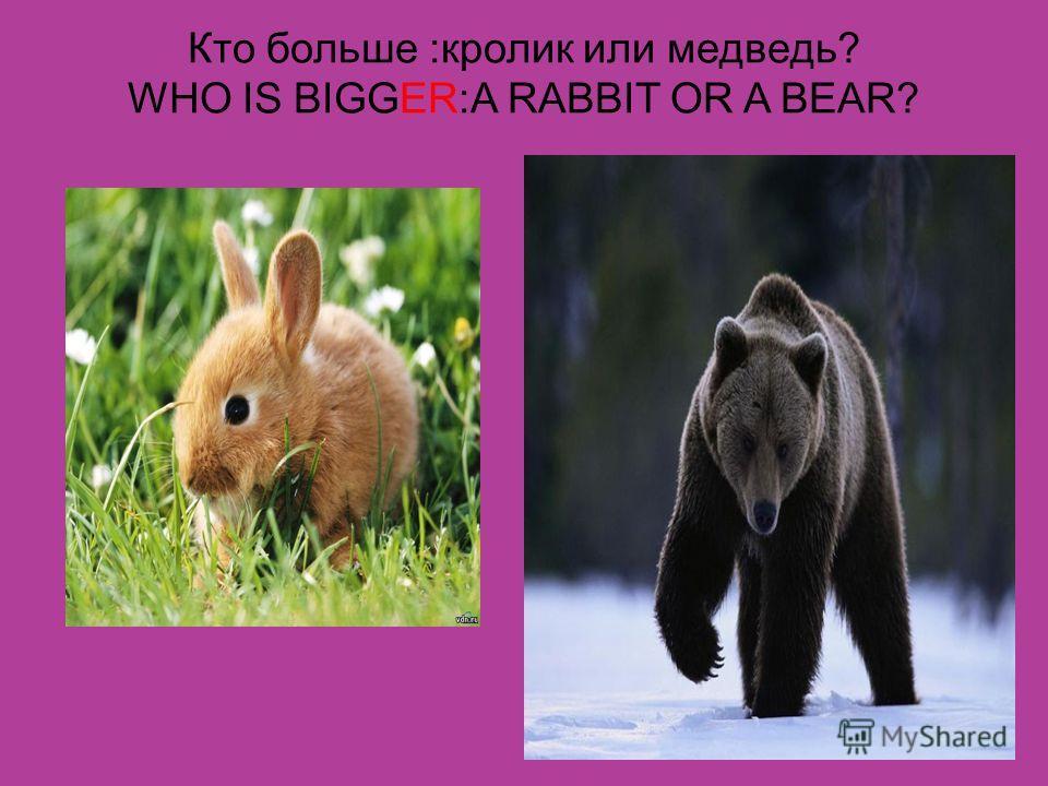 Кто больше :кролик или медведь? WHO IS BIGGER:A RABBIT OR A BEAR?