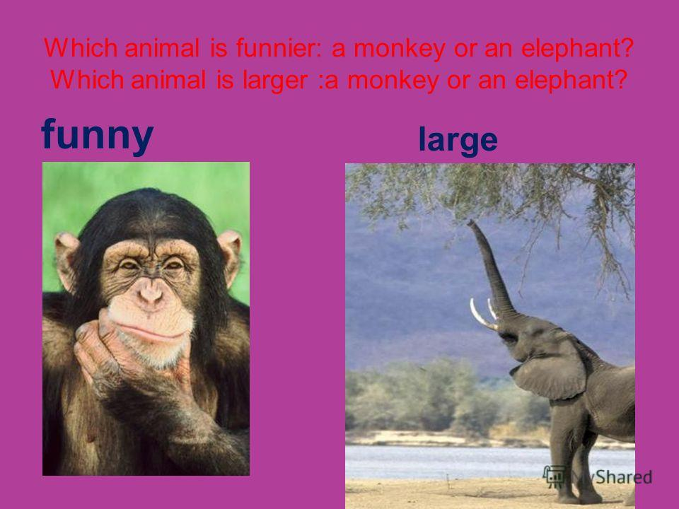 Which animal is funnier: a monkey or an elephant? Which animal is larger :a monkey or an elephant? funny large
