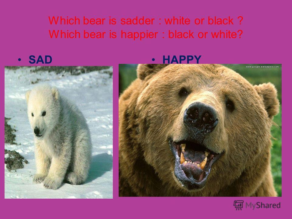 Which bear is sadder : white or black ? Which bear is happier : black or white? SADHAPPY