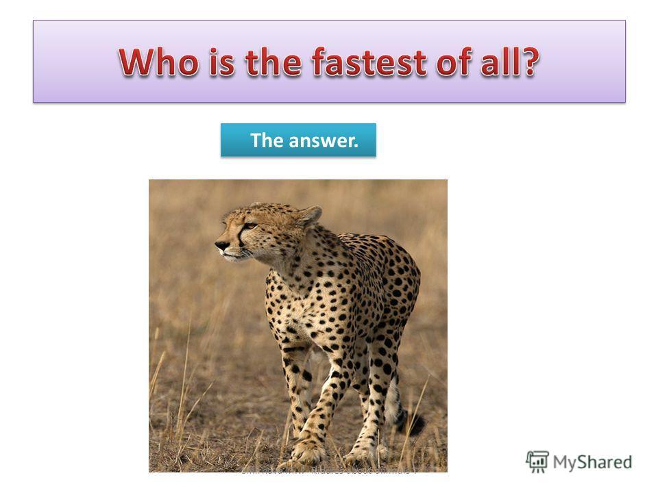The answer. Smirnova M.V. Riddles about animals.