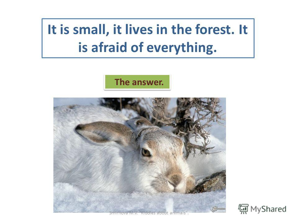 It is small, it lives in the forest. It is afraid of everything. The answer. Smirnova M.V. Riddles about animals.