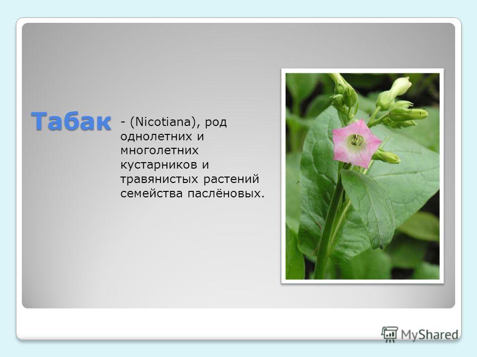 Табак - (Nicotiana), род однолетних и многолетних кустарников и травянистых растений семейства паслёновых.
