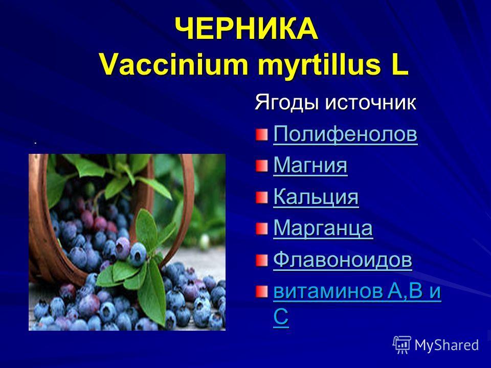 ЧЕРНИКА Vaccinium myrtillus L Ягоды источник Полифенолов Магния Кальция Марганца Флавоноидов витаминов А,В и С.