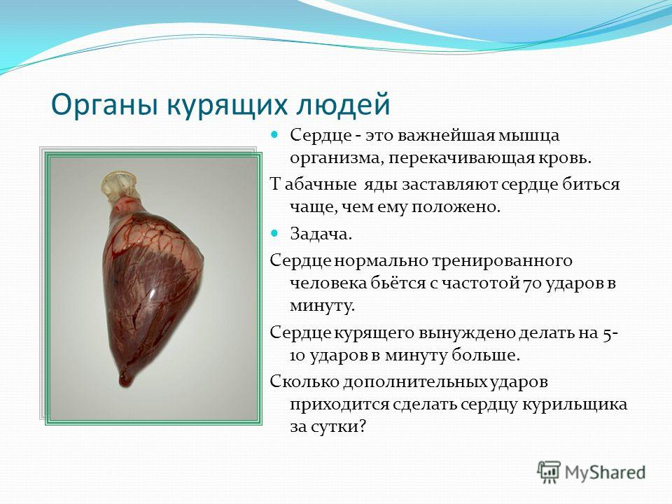 Органы курящих людей Сердце - это важнейшая мышца организма, перекачивающая кровь. Т абачные яды заставляют сердце биться чаще, чем ему положено. Задача. Сердце нормально тренированного человека бьётся с частотой 70 ударов в минуту. Сердце курящего в