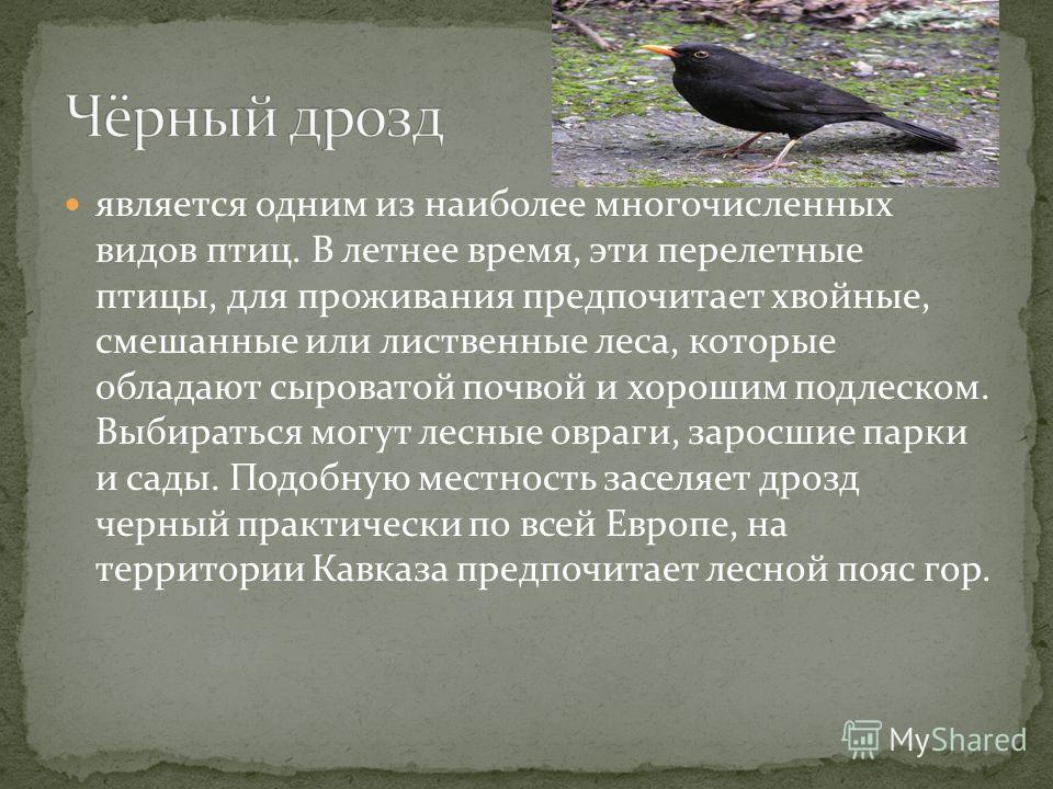 является одним из наиболее многочисленных видов птиц. В летнее время, эти перелетные птицы, для проживания предпочитает хвойные, смешанные или лиственные леса, которые обладают сыроватой почвой и хорошим подлеском. Выбираться могут лесные овраги, зар