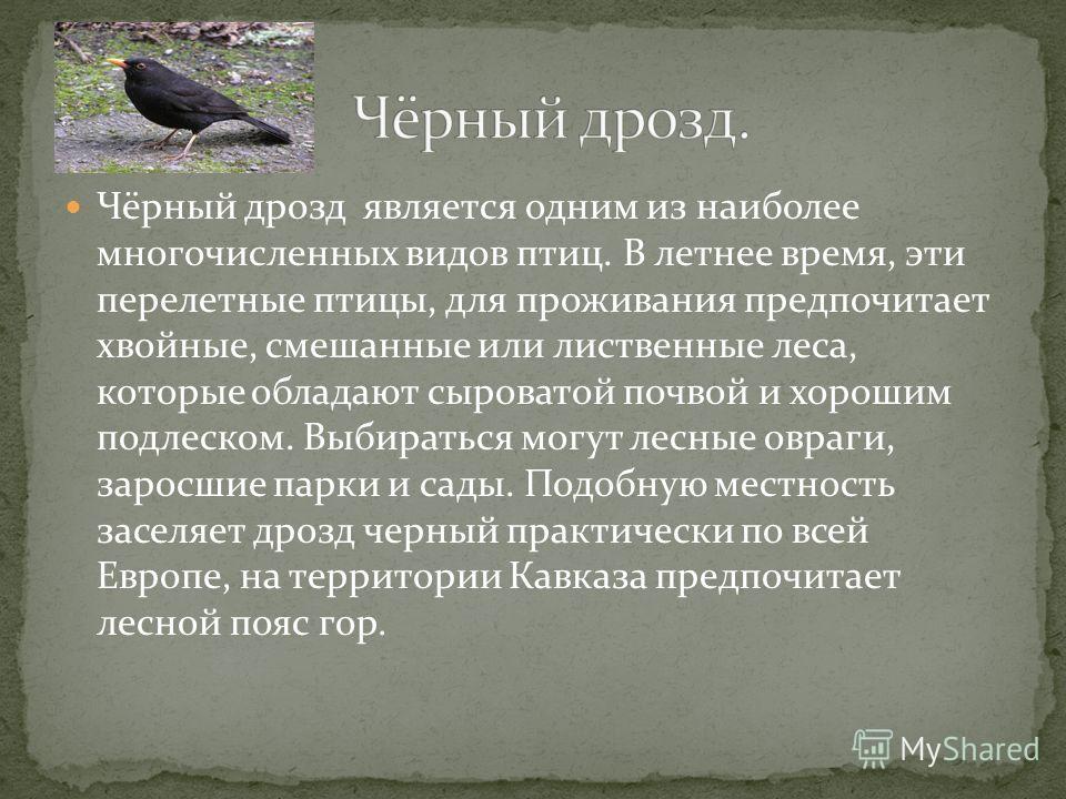 Чёрный дрозд является одним из наиболее многочисленных видов птиц. В летнее время, эти перелетные птицы, для проживания предпочитает хвойные, смешанные или лиственные леса, которые обладают сыроватой почвой и хорошим подлеском. Выбираться могут лесны