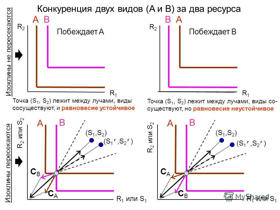 Конкуренция двух видов (A и B) за два ресурса R1R1 R2R2 AB Побеждает A AB Побеждает B R 1 или S 1 R 2 или S 2 A B R1R1 R2R2 CACA CBCB (S 1,S 2 ) R 1 или S 1 R 2 или S 2 A B CBCB CACA (S 1,S 2 ) Точка (S 1, S 2 ) лежит между лучами, виды со- существую