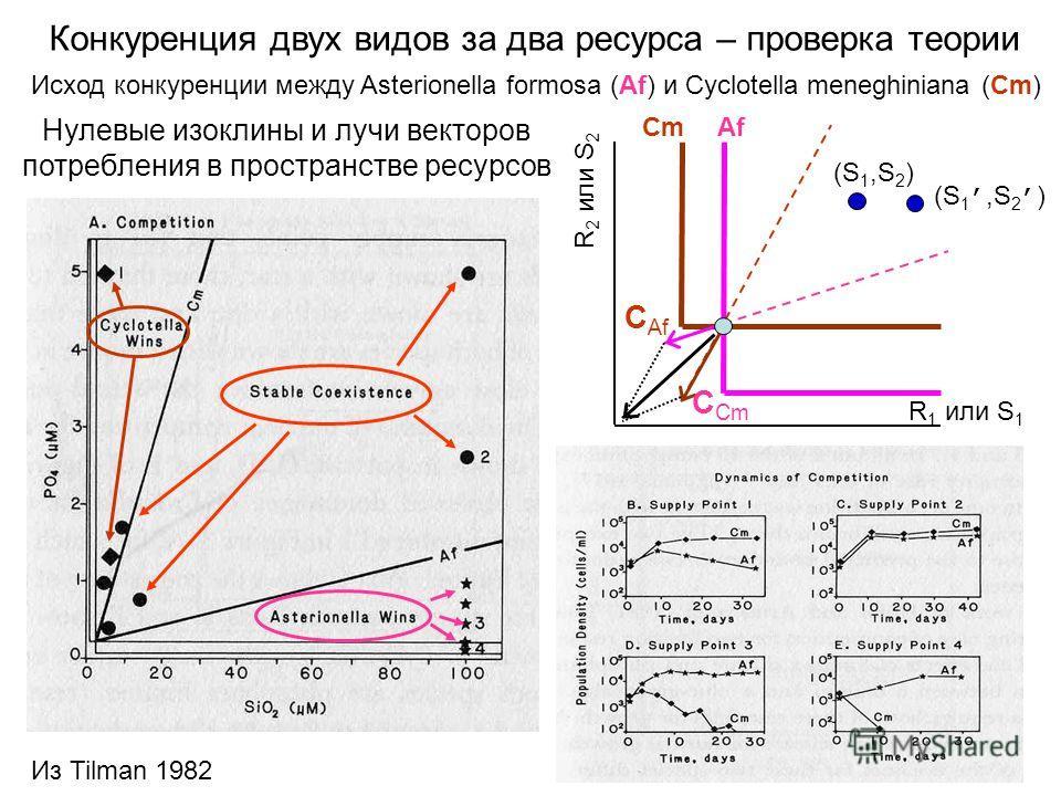 Конкуренция двух видов за два ресурса – проверка теории Исход конкуренции между Asterionella formosa (Af) и Cyclotella meneghiniana (Cm) Нулевые изоклины и лучи векторов потребления в пространстве ресурсов R 1 или S 1 R 2 или S 2 C Cm C Af (S 1,S 2 )