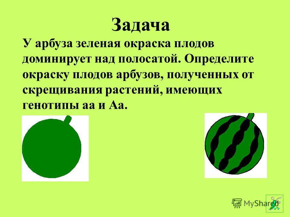 У арбуза зеленая окраска плодов доминирует над полосатой. Определите окраску плодов арбузов, полученных от скрещивания растений, имеющих генотипы аа и Аа. Аааа Задача