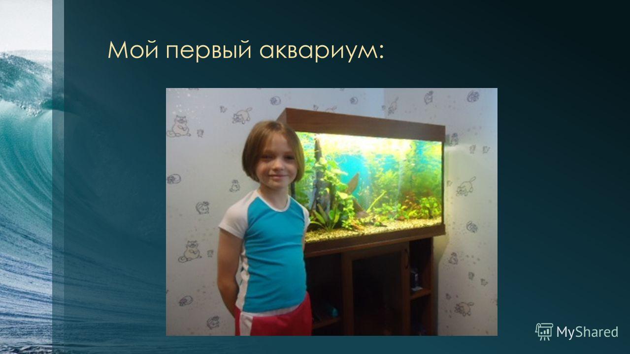 Мой первый аквариум: