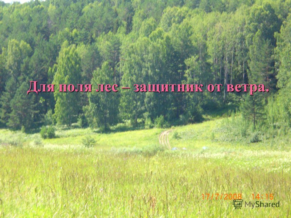 Для поля лес – защитник от ветра.