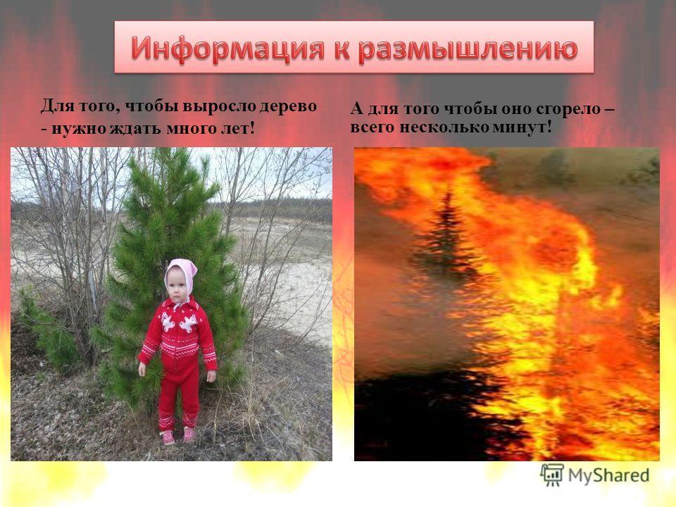 Для того, чтобы выросло дерево - нужно ждать много лет! А для того чтобы оно сгорело – всего несколько минут!