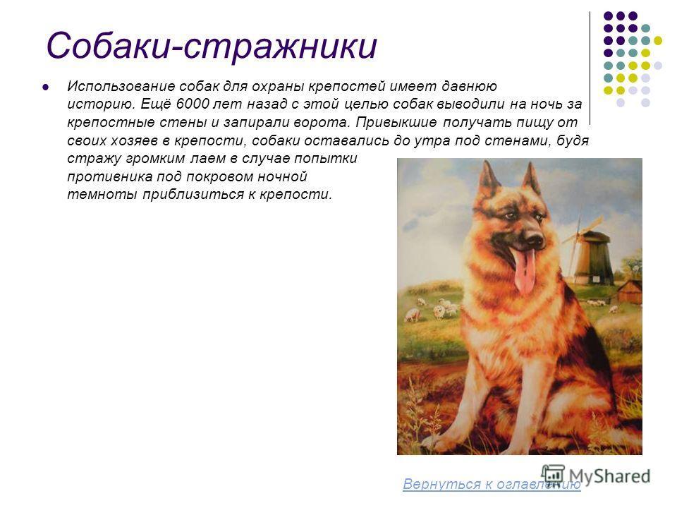 Собаки-стражники Использование собак для охраны крепостей имеет давнюю историю. Ещё 6000 лет назад с этой целью собак выводили на ночь за крепостные стены и запирали ворота. Привыкшие получать пищу от своих хозяев в крепости, собаки оставались до утр