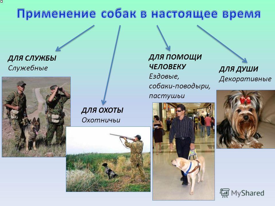 ДЛЯ СЛУЖБЫ Служебные ДЛЯ ОХОТЫ Охотничьи ДЛЯ ПОМОЩИ ЧЕЛОВЕКУ Ездовые, собаки-поводыри, пастушьи ДЛЯ ДУШИ Декоративные