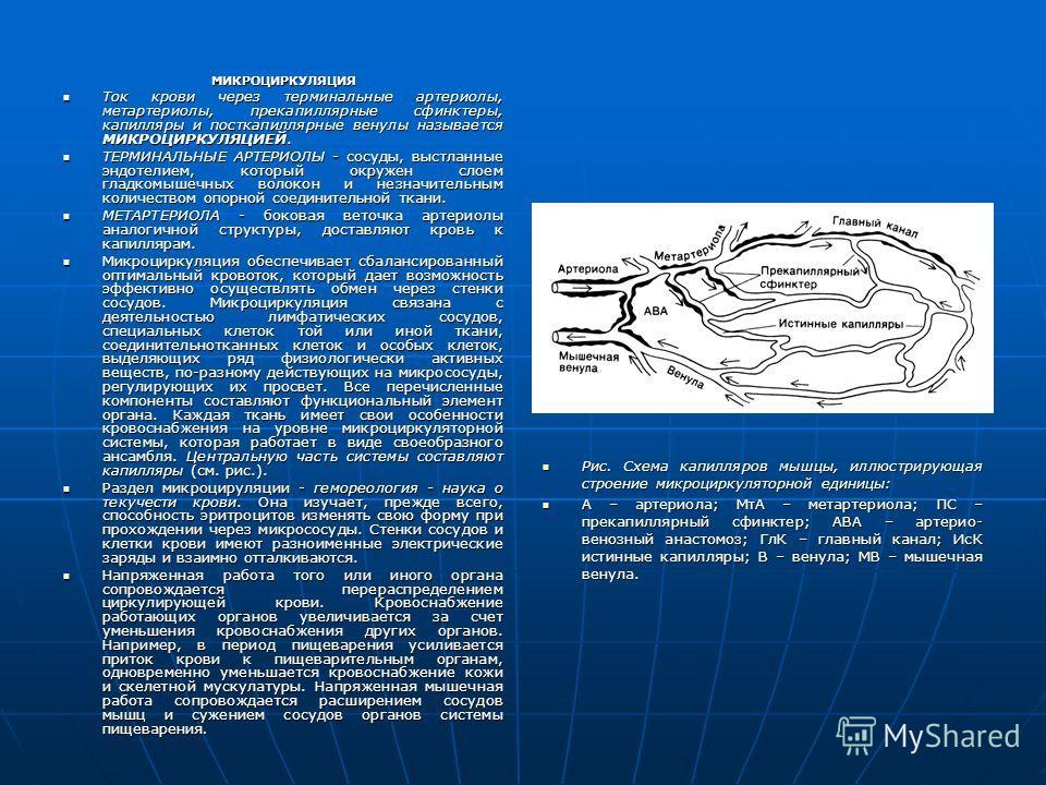 МИКРОЦИРКУЛЯЦИЯ Ток крови через терминальные артериолы, метартериолы, прекапиллярные сфинктеры, капилляры и посткапиллярные венулы называется МИКРОЦИРКУЛЯЦИЕЙ. Ток крови через терминальные артериолы, метартериолы, прекапиллярные сфинктеры, капилляры