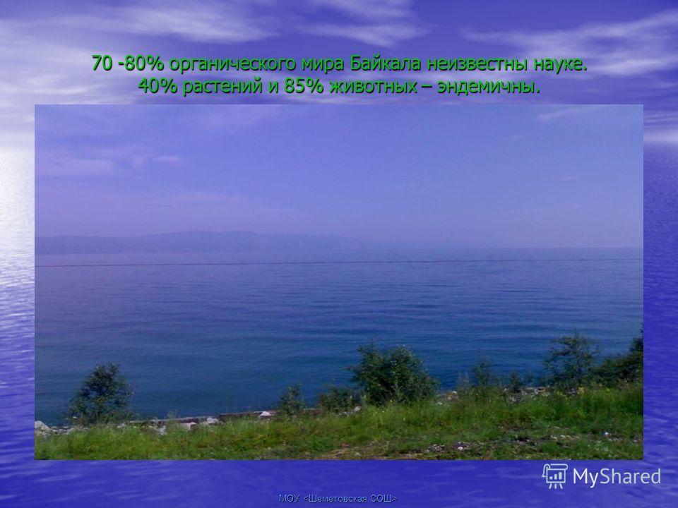 70 -80% органического мира Байкала неизвестны науке. 40% растений и 85% животных – эндемичны.