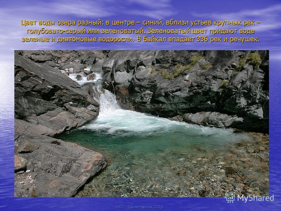 МОУ Цвет воды озера разный: в центре – синий, вблизи устьев крупных рек – голубовато-серый или зеленоватый. Зеленоватый цвет придают воде зеленые и диатомовые водоросли. В Байкал впадает 336 рек и речушек.