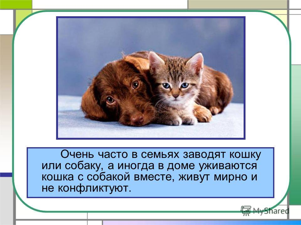 Очень часто в семьях заводят кошку или собаку, а иногда в доме уживаются кошка с собакой вместе, живут мирно и не конфликтуют.