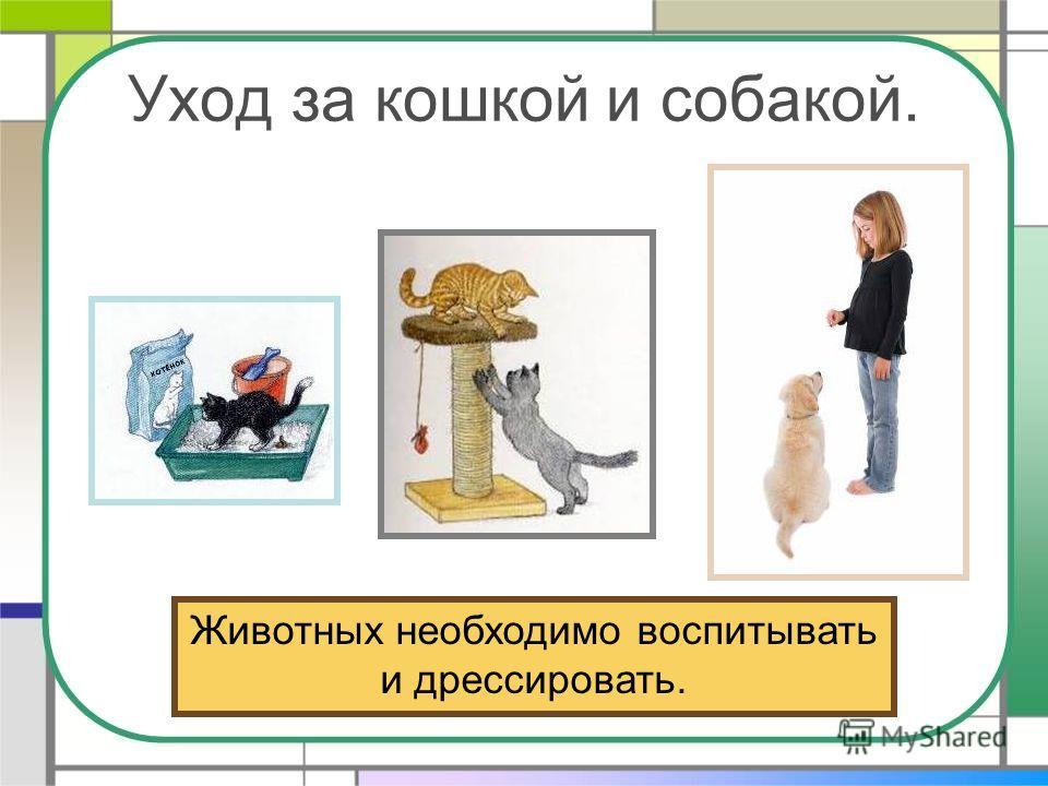 Уход за кошкой и собакой. Животных необходимо воспитывать и дрессировать.
