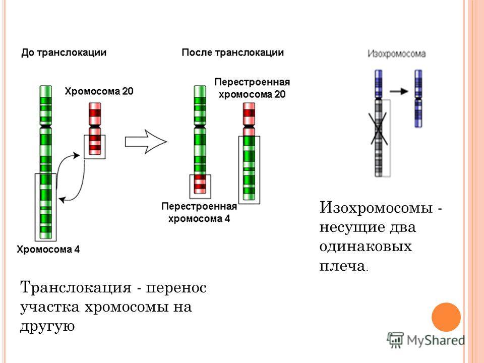 Транслокация - перенос участка хромосомы на другую Изохромосомы - несущие два одинаковых плеча.